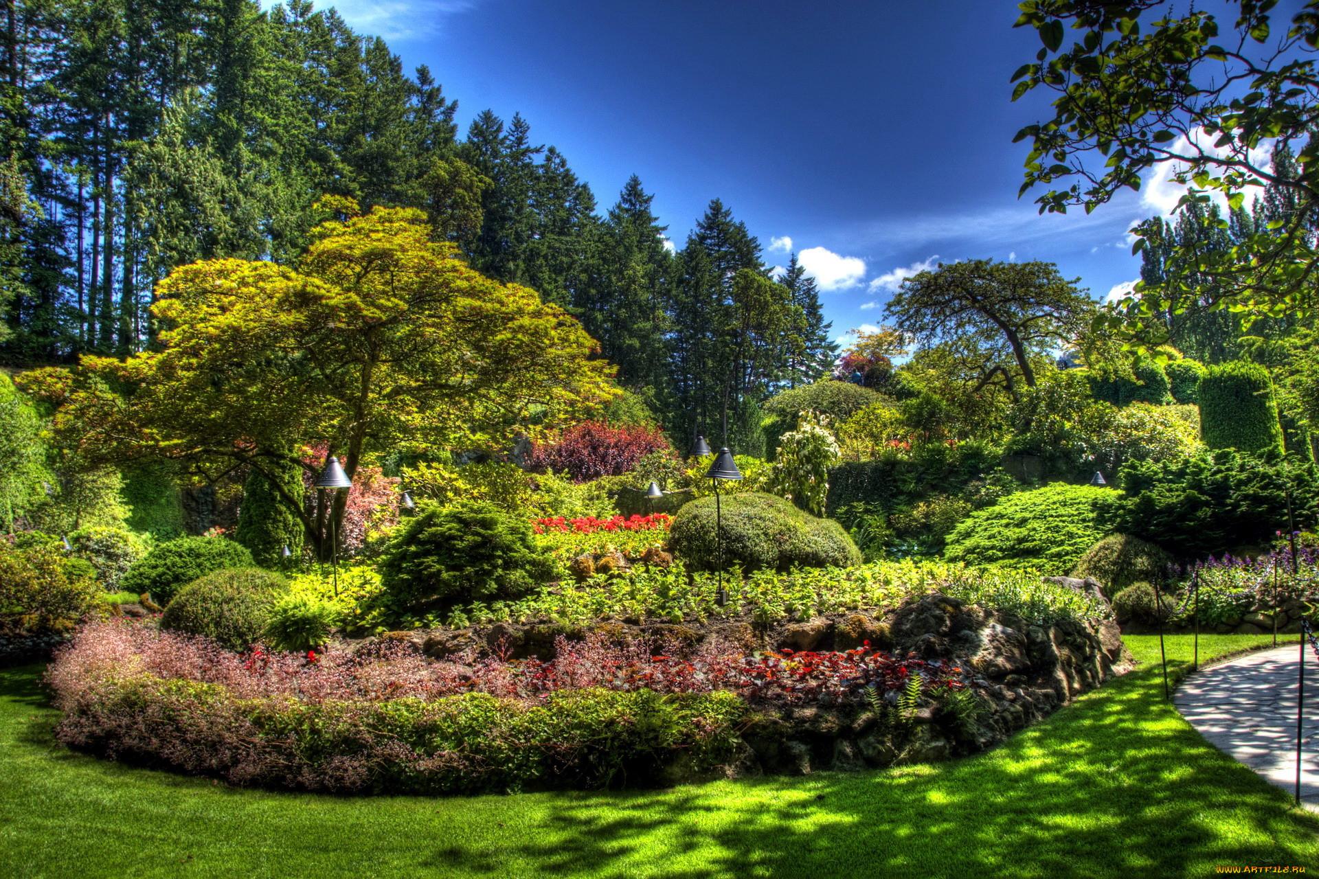 природа, парк, кусты, деревья